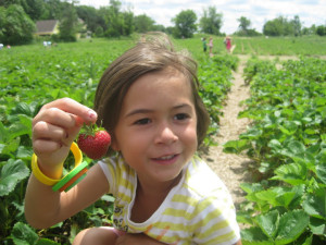 strawberry_pick3